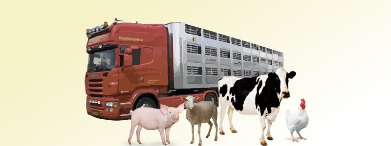 Guias transporte animal